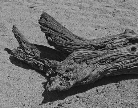 Log on Sand by Philip Chiu