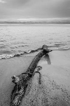 Log by Ronnie  Chan