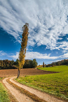 Lombardy Poplar Tree by Davorin Mance