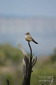 Lone Bird by Sherry Vance