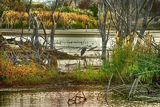 Lone Blue Heron in Fall by Kimberleigh Ladd