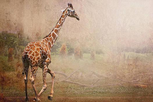 Lone Giraffe  by Victoria Winningham