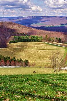 Lone Horse in Spring by Jean Goodwin Brooks