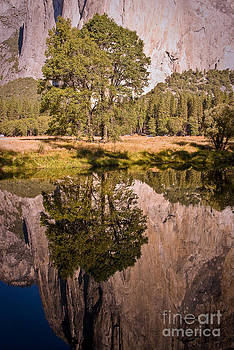 Lone Oak and El Capitan in Yosemite by Terry Garvin