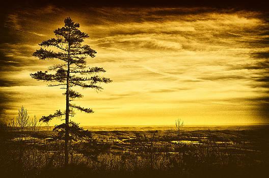 Lone Pine by Heather Bridenstine