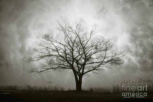 David Gordon - Lone Tree and Clouds