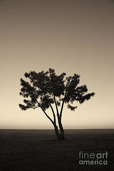 David Gordon - Lone Tree at Twilight Toned