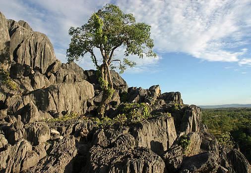 Lone tree by Gordon  Grimwade