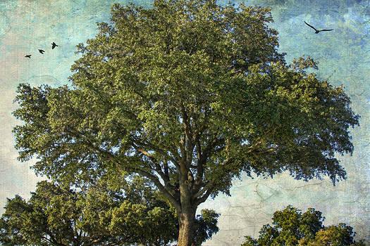 Lone Tree by Joan Bertucci