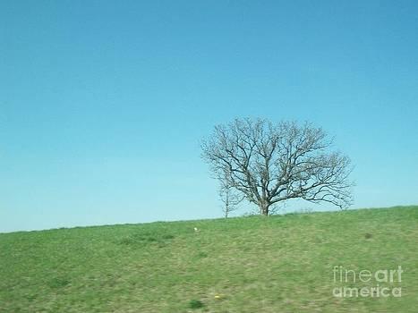 Lone Tree by Kylie Funk