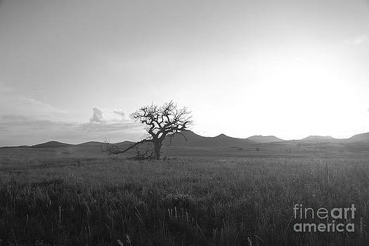 Lone Tree by Margaret Guest