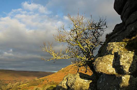 Lone tree on Bonehill Rocks by Pete Hemington