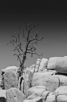 Lone Tree by Philip Chiu