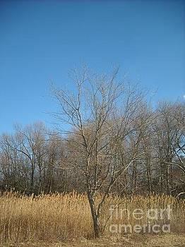 Lone Tree by Rebecca Lauber