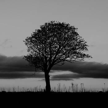 Matt Dobson - Lone Tree Silhouette
