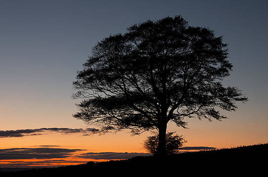 Lone tree silhouetted at Dusk by Pete Hemington