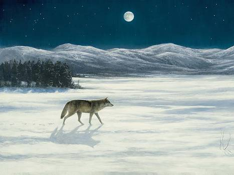 Lone Wolf in Winter   version 2 by Steve Swavely