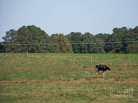 Lonely Cow by Kevin Croitz