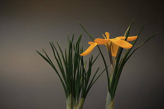 Lonely Crocus by Elizabeth Stein