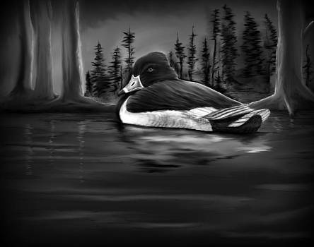 Lonely ring necked duck by Monic LaRochelle