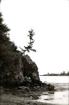 Lonely Tree by Belinda Dodd