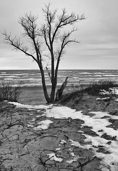 Lonely Tree Beside Lake Michigan by Kevin Kludy