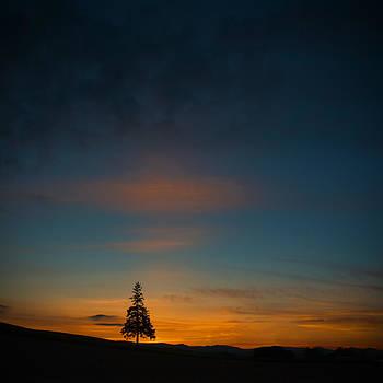 Lonely Tree by Jason KS Leung