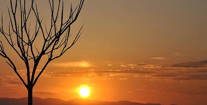 Lonely Tree by Joshua Burcham