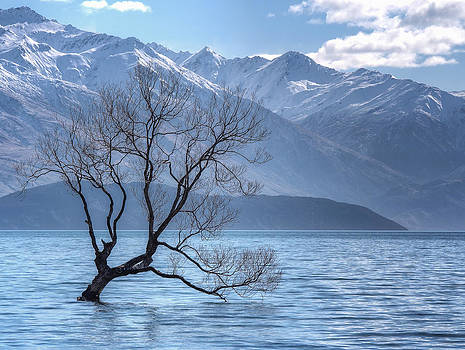 Lonely Tree by Kim Andelkovic