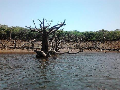 Lonely tree by Mangala Shenoy