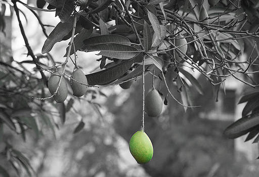 Loner by Amit Khanna