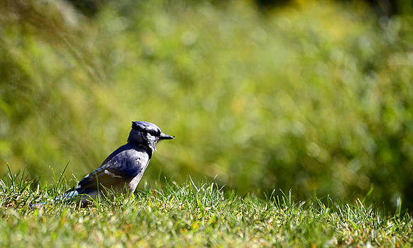 Lonesome and Blue by Lori Tambakis