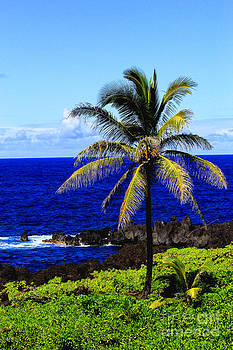 Lonesome Palm by Jeff Sommerfield