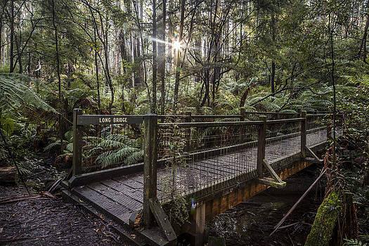 Long Bridge by Shari Mattox