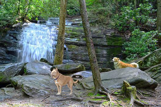 Long Creek Falls by Bob Jackson
