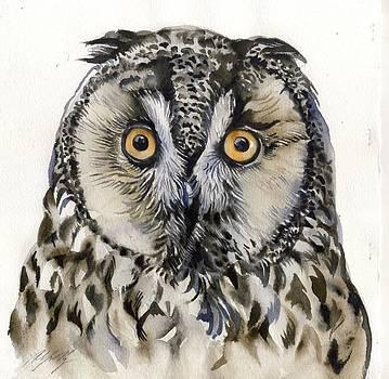 Alfred Ng - long eared owl