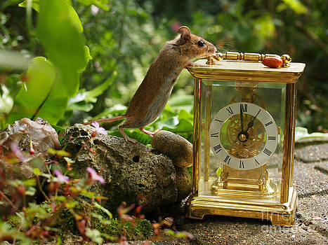 Long-tailed Field Mouse Lunchtime by Elizabeth Debenham