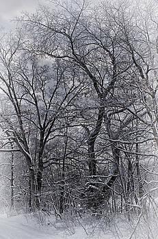 Longer Winter by Roxanna Coeling