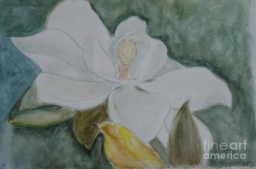 Longue Vue Magnolia 3 by Katie Spicuzza