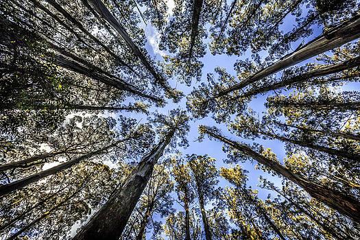 Look Up by Shari Mattox