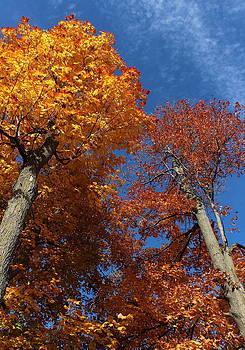 Rosanne Jordan - Look Up to Autumn