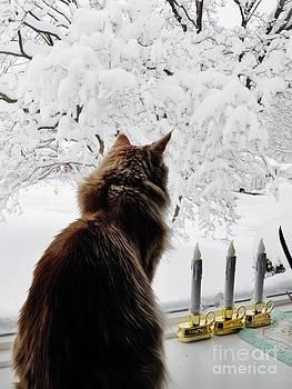 Judy Via-Wolff - Looking at the Winter Wonderland