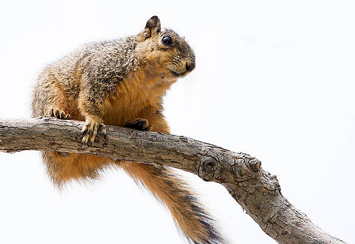 Looking For a Nut by Lisa Moore