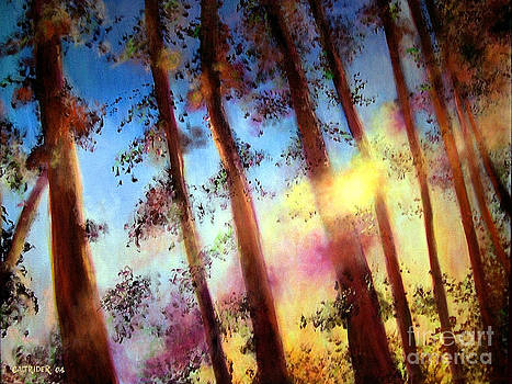 Looking Through the Trees by Alison Caltrider