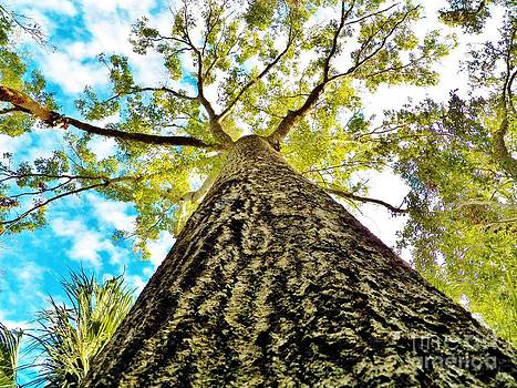 Judy Via-Wolff - Looking up Florida Sky and Tree