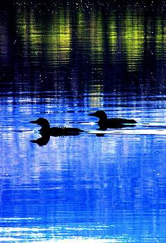 Loons in Pittsburg by Will Boutin Photos