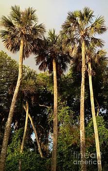 Lost Beach Palms by Enid Gough