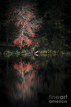 Evelina Kremsdorf - Lost In The Autumn Of Eternity