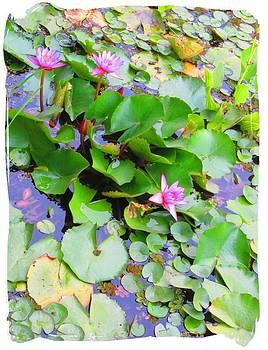 Lotus by Adil