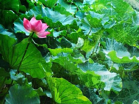 Lotus bloom  by Natalya Karavay